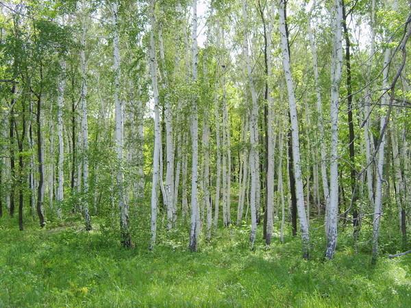 Чудесные обитатели леса всегда рады